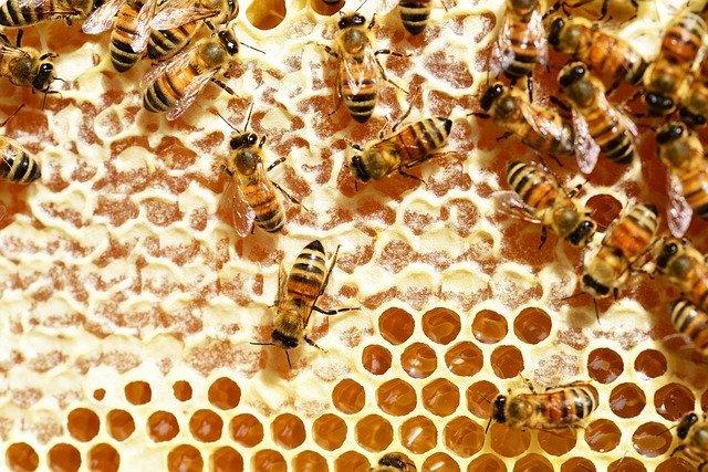 Pčele, ilustracija, foto: Worcestershire, Pixabay