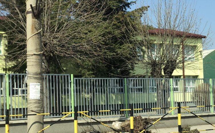Posečena stabla duž Ulice Radetove u Svrljigu