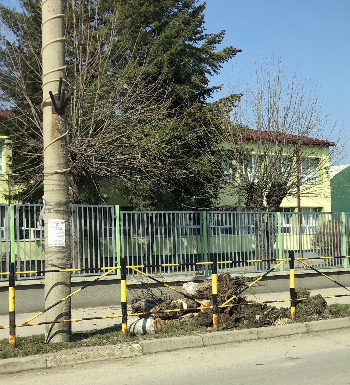 Seča drvoreda, foto: Radio Bubamara