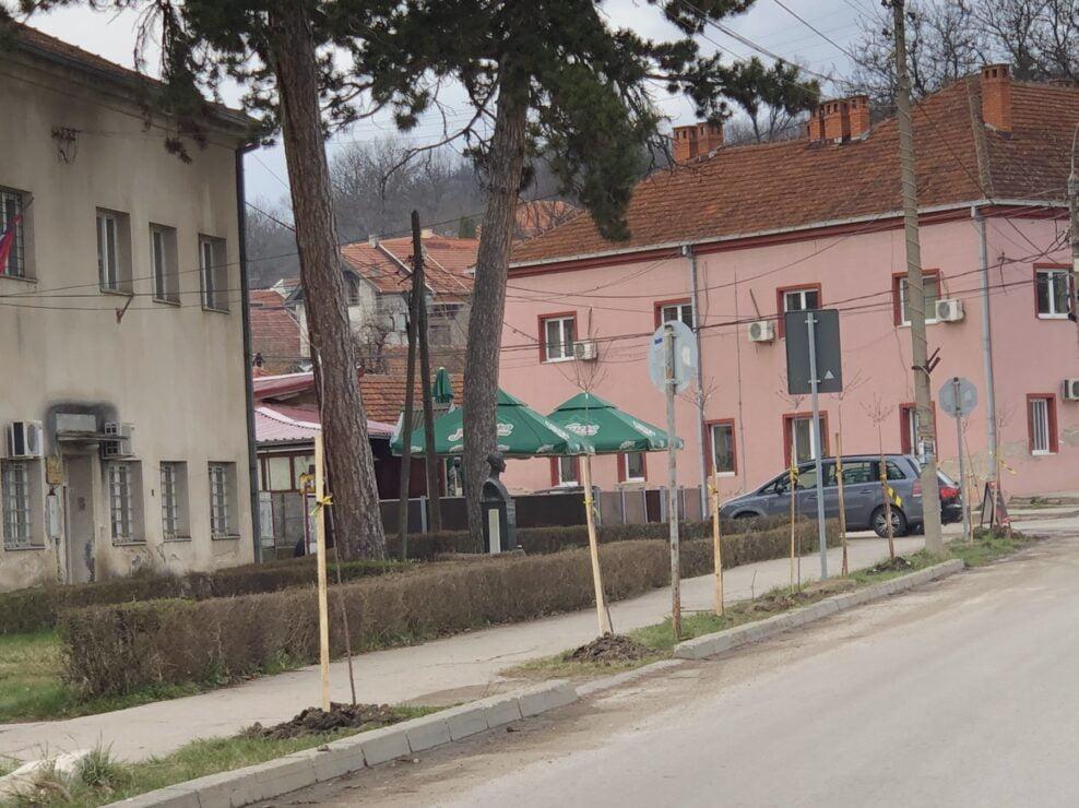 Drvored, foto: Radio Bubamara