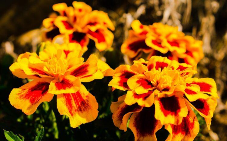 """Ekološka akcija ,,Cvet za lepši svet"""""""
