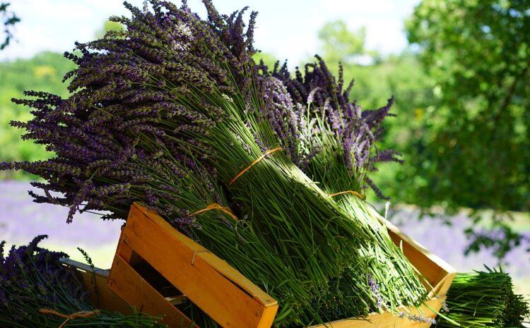 Obaveštenje za sve sakupljače lekovitog bilja i šumskih plodova