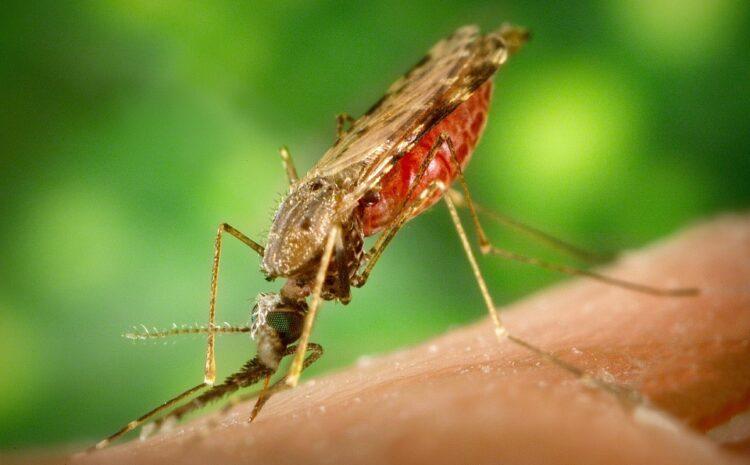 SVRLJIG: 23. septembra novi tretman suzbijanja larvi komaraca